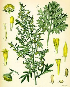 Artemisiaabsinthium