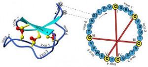 cyclotidek